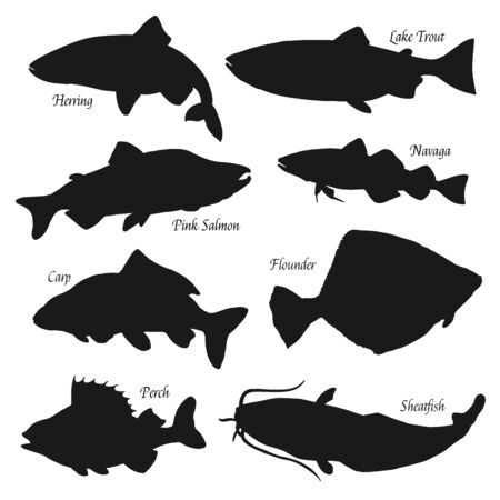 Fish black silhouettes vector icons, fish market and fishing. Sea herring, lake trout and perch, ocean pink salmon, river sheatfish and flounder, carp and navaga fish. Isolated on white