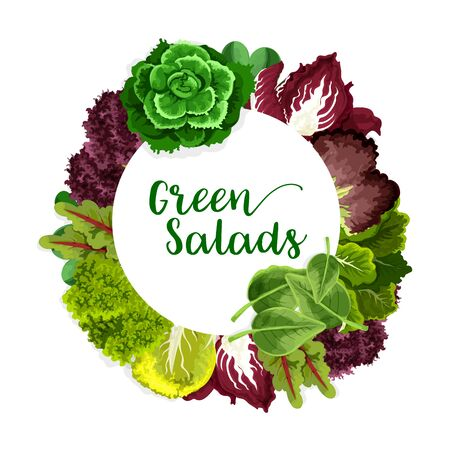 Greens and lettuce salad vegetable, vector farm and garden veggies. Vector Green spinach and bok choy, chinese cabbage and basil, radicchio and corn salad, watercress and batavia, arugula and chard Ilustracja