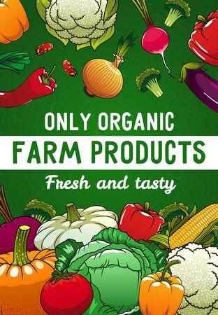 Vegetables, organic food, vector veggies and greenery. Corn, tomato and squash, cauliflower, broccoli, pumpkin and cabbage, leek, beans. Farm market production, ecological organic food cartoon poster