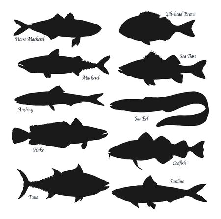 Fish black silhouettes. Sea animals horse mackerel, gilt-head bream or sea bass and anchovy, ocean eel, tuna, hake, codfish and sardine. Fishes types, fishing sport isolated vector objects