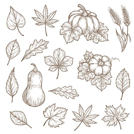 Autumn leaves and pumpkins isolated vector sketch icons. Fall foliage set of engraved maple, oak or birch and poplar, beech or elm and aspen autumn detailed tree leaves, engraving hand drawn sketch