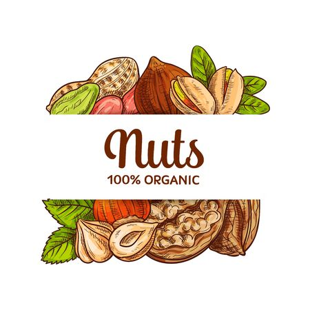 Nuts seeds sketch vector banner. Various nuts for healthy nutrition. Shelled pistachios and peanut or groundnut, hazelnuts and walnut in shell on white background