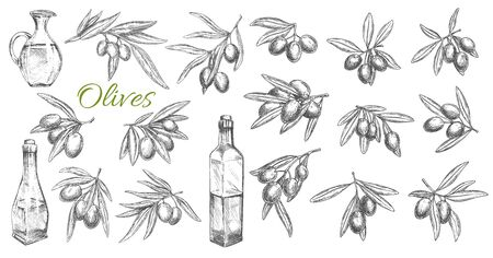 Olives and oil bottles isolated vector sketch icons. Branches, leaves and olive fruits engraved symbols. Kitchen oil jug, mediterranean cuisine seasonings design elements, hand drawn vector sketch