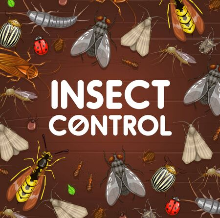 Pest control and insect disinsection. Mosquito, cockroach, ant and spider, bedbug, fly, tick and grain moth, wasp, aphid, colorado beetle, ladybug and earwig vector frame border on wooden background