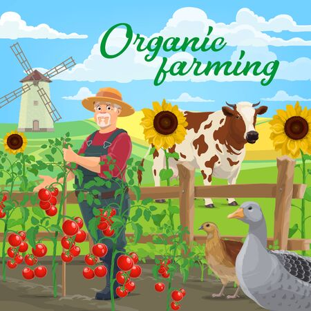 Organic farming food products, vector agriculture. Farmer at vegetable and animal farm, field and garden with cow, goose and quill, windmill, tomatoes and sunflowers near fence, ecological gardening