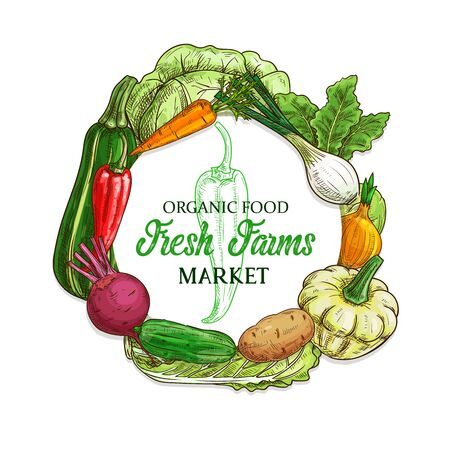 Vegetables and farm veggies sketch, food market harvest vector frame. Organic vegetables cabbage, zucchini squash and pepper, carrot, onion, potato and cucumber, beet and fennel, cooking ingredients