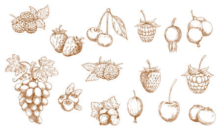Wild and garden berry isolated sketches. Vector strawberry, raspberry, cherry and blueberry, blackberry, cranberry, red and black currant, gooseberry, bilberry, grape and briar berry objects Vektoros illusztráció