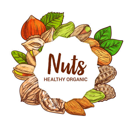 Nut seeds, legumes and beans vector sketch food design. Almond, hazelnut and pistachio, peanut, walnut and filbert with nutshells, grains and green leaves. Healthy nutrition ingredient, sketched nuts