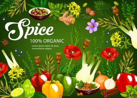 Herbs and spices, seasonings vegetables and cooking condiments, vector food flavoring ingredients. Farm garlic and rosemary, culinary cinnamon and anise, lime and ginger, celery and paprika pepper