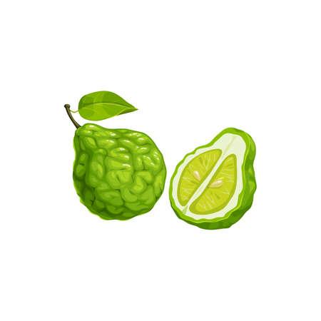 Bergamot orange fruit, tropical exotic food, vector isolated icon. Bergamot orange fruits half cut and whole, tropic farm juicy exotic fruits harvest, dessert and perfume cosmetics ingredient
