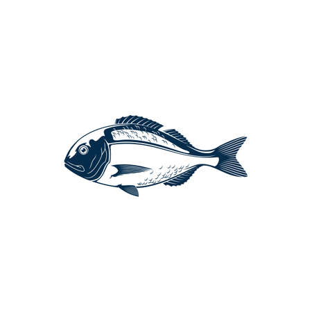 Gilt head bream isolated Sparus aurata saltwater fish. Vector Orata or Dorada fish of bream family Sparidae found in Mediterranean Sea. Icon of underwater animal with flounders, seafood