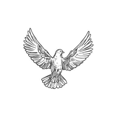Dove bird front with spread wings. Vector flying dove pigeon sketch icon
