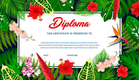Kids diploma with tropical plants and flowers. Vector education certificate in frame of exotic hibiscus, frangipani and orchid blossoms, fern, palm and jungle plant leaves. Children diploma template