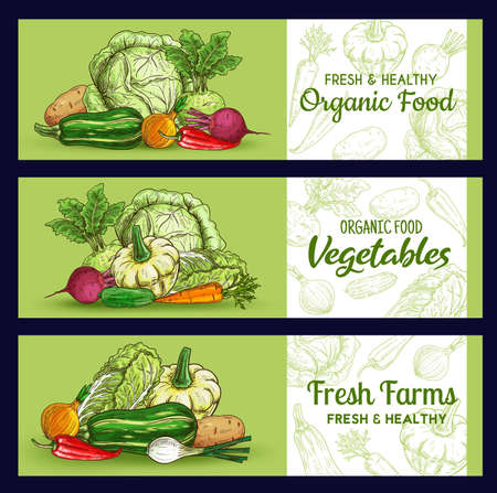 Farm vegetables sketch banners, vector veggies squash and potato, beetroot, onion with chili pepper and kohlrabi. Onion, carrot and chinese cabbage fresh vegetable organic vegan food, market store