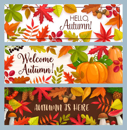 Hello Autumn vector banners with falling leaves, pumpkin and fall foliage. Mushrooms, pine cones, maple, oak or poplar and birch tree with chestnut leaf and rowan. Welcome autumn seasonal greetings