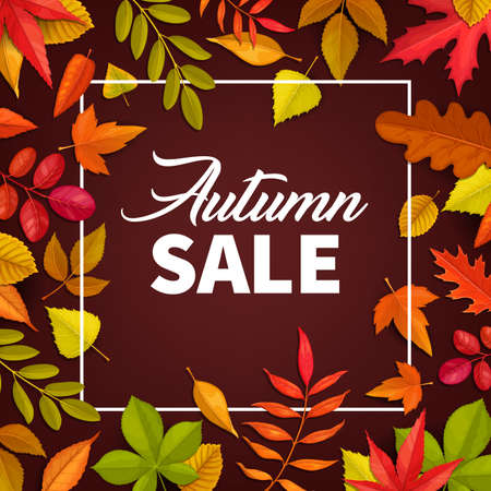 Autumn sale vector poster. Fallen leaves maple, rowan and chestnut, oak and birch trees. Autumnal discount promo offer card for fall season price off, square frame design with typography and foliage