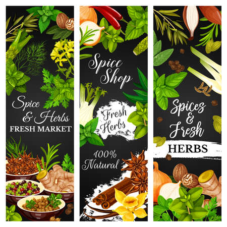 Cooking herbs and seasonings, spice condiments, vector food vegetables. Farm herbs and seasonings garlic and rosemary, culinary vanilla, cinnamon and anise, lime and ginger, celery herb and pepper