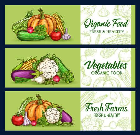 Farm vegetables, veggies sketch banner, vector chalkboard food market harvest. Vegetables and vegetarian veggie food, cauliflower and broccoli cabbage, garlic, eggplant and tomato, pepper and corn