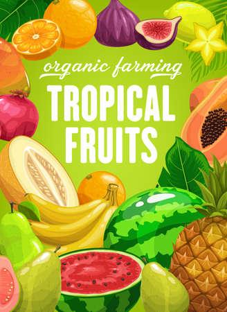 Tropical fruits vector pineapple, mango and banana, pomegranate and pear. Watermelon, guava, figs and carambola, lime, lemon and orange. Natural ripe fresh fruits, organic farming cartoon poster Illusztráció