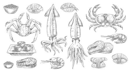 Seafood, sketch food of sea, fish and sushi, vector isolated hand drawn icons. Seafood oyster, mussel, shrimp and crab with salmon steaks, sashimi and caviar, gourmet, cuisine prawn, squid and lobster