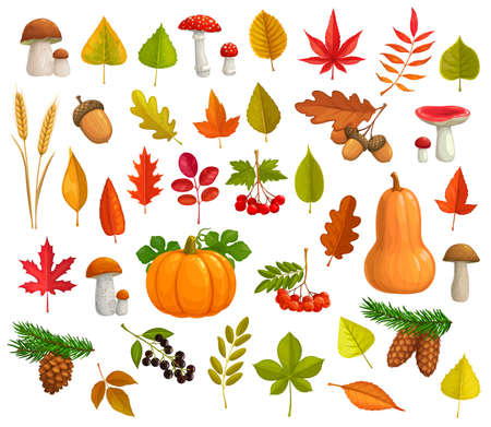 Autumn vector icons cartoon falling leaves, pumpkin, mushrooms, pine cones. Maple, oak or poplar and birch tree with chestnut leaf and rowan. Fall seasonal ripe berries, wheat ears and fall foliage.