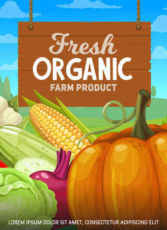Organic farm fresh vegetables banner. Farmer natural food products, veggies and greenery autumn harvest. Pumpkin, con and cabbage, bell pepper, beet and squash, cauliflower vegetables cartoon vector