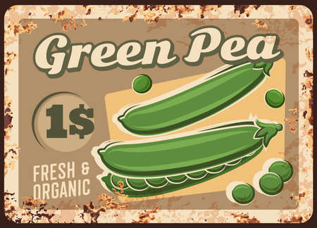 Green peas rusty metal plate, vector price tag for farm market, vintage rust tin sign. Fresh pea pods vegetable products retro poster, organic veggies for retail. Store or market ad ferruginous card