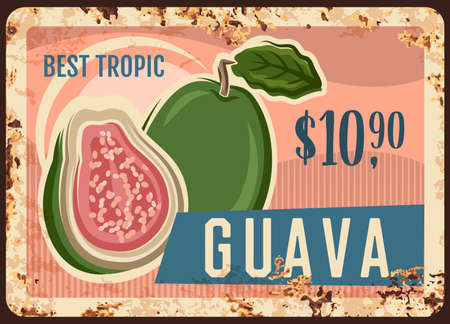 Guava tropical fruit rusty metal signboard of vector fresh farm food. Exotic garden ripe guava old tin plate of whole and half fruit with grunge rusty effect and price, farm market and grocery design Illustration