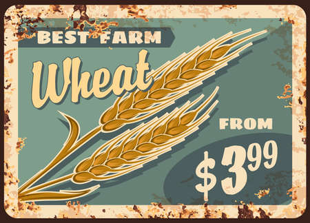 Wheat rusty metal plate, vector promo for agricultural farm production. Farm grain harvest vintage rust tin sign, natural product retro poster. Golden wheat ears ferruginous price tag for market 向量圖像