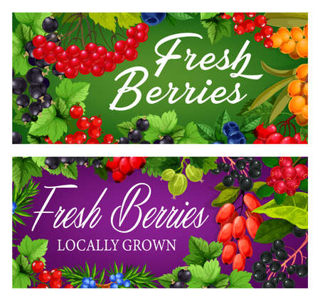 Garden and wild ripe berries banner. Guelder rose, black and red currant, hippophae, gooseberry and blueberry, juniper, cornelian cherry and elderberry, dog rose vector. Berries farm posters