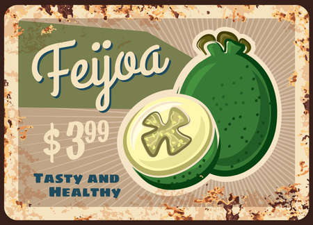 feijoa rusty metal plate, vector vintage rust tin sign with ripe sweet exotic fruit, price tag for retail. Orchard organic production retro poster or shop ad promo, ferruginous label for farm market