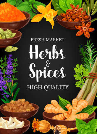 Herbs and spices vector seasonings anise, vanilla, lavender and turmeric, ginger, anis and vanilla. Coriander, cardamon, mint and poppy, garlic, rosemary and celery herbal seasonings and condiments
