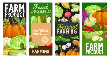 Farm vegetables and veggies banners, food harvest and farm market products. Natural organic bio vegetables cauliflower, garlic and broccoli cabbage, garlic, eggplant and tomato, pepper and corn