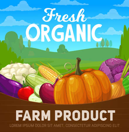 Fresh farm vegetables vector poster with organic food products. Cartoon tomato, cabbage, pumpkin and onion, zucchini, cauliflower, corn and eggplant, cucumber and beet in wood basket on farm field