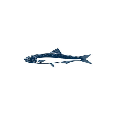 Anchovy small forage fish family Engraulidae isolated icon. Vector shoaling fish used as food and bait. European anchovy, Engraulis encrasicolus, Anchoa, Anchoviella, Engraulis or Stolephorus, Thryssa