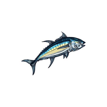 Atlantic bluefin tuna isolated saltwater fish sketch. Vector saltwater animal, atlantic bluefin tunny