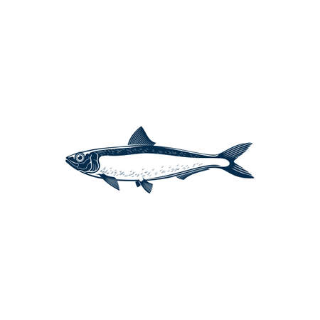 Sardine isolated fish hand drawn sketch. Vector bluefin marine animal, cold blooded sardine saltwater aquatic habitat. Pilchard oily forage small epipelagic fish in herring Clupeidae. Sardina icon Illustration