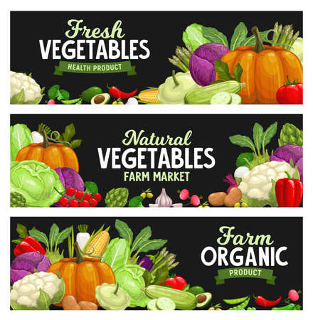 Vegetables banners, farm market food veggies, vector organic harvest. Natural healthy garlic, pepper and pumpkin, cauliflower and vegetarian artichoke, potato and pepper, broccoli cabbage and zucchini
