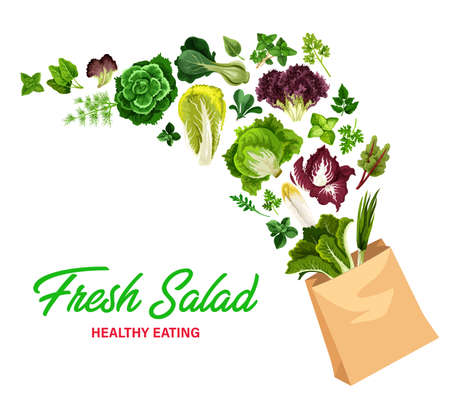 Greenery salads and fresh greens, vector lettuces in shopping bag. Arugula, chicory and spinach, watercress, collard and mangold leaf salads, farm garden cilantro and romanesco vegetables raw food