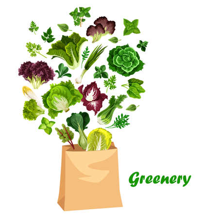 Greenery salads and greens, vector lettuces in shopping bag. Arugula, chicory and spinach, watercress, collard and mangold leaf salads, farm garden cilantro and romanesco vegetarian food vegetable