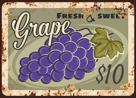 Grape rusty metal plate, vector vintage rust tin sign with bunch of ripe black grapes with leaf. Shop or farm promo, ferruginous label, vineyard production advertising retro poster with price tag