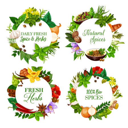 Natural spices and aromatic kitchen herbs round banners. Peppermint, mustard and rosemary, onion, garlic and pepper, coriander, dill and bay leaf, saffron, nutmeg and turmeric, vanilla, anise vector