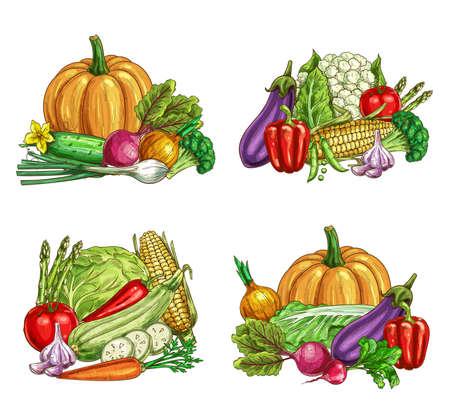 Fresh farm vegetable vector sketches of garden veggie food. Ripe tomato, carrot, chilli and bell peppers, broccoli, onion, garlic and zucchini, radish, cauliflower, asparagus, green and napa cabbage Illusztráció