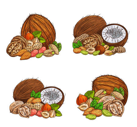 Nuts and seeds vector sketch almond, peanuts and pistachio, coconut, hazelnut and walnut. Engraved vegetarian and vegan natural protein raw food peeled and unpeeled ingredients with green leaves set