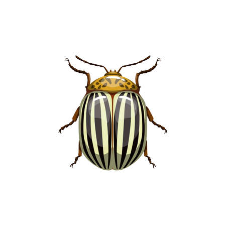 Colorado beetle, insect parasite bug pest control and agriculture disinsection service, vector isolated. Colorado potato beetle and vermin parasite insect pesticide pest control Vector Illustration