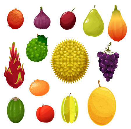 Fruits icons, tropical exotic and farm garden harvest, vector. Apple and pear, tropic durian and dragon fruit pitaya, feijoa and tangerine, melon cantaloupe and lychee, gig and grapes with plum