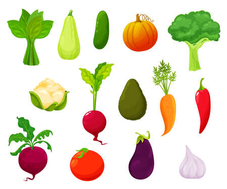 Farm vegetables harvest, market veggies vector set. Sorrel, zucchini and cucumber, pumpkin, broccoli and cauliflower, radish, avocado and carrot, chili pepper, beetroot and tomato, garlic, eggplant 向量圖像