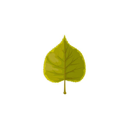 Linden leaf vector icon, cartoon tree foliage, leaf of green color. Botanical design element, nature or forest theme isolated on white background, sign
