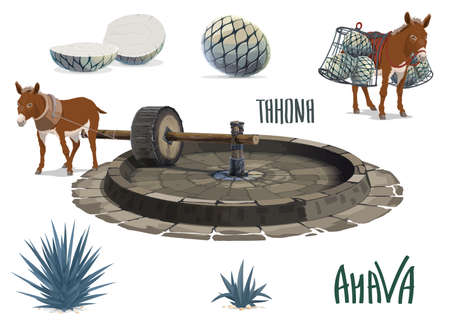 Blue agave growing and aguamiel extraction for tequila. Donkey or mule carrying agave pina heart or pineapple, pulling tahona stone mill wheel. Mexican tequila drink production, agave plantation tool Vettoriali
