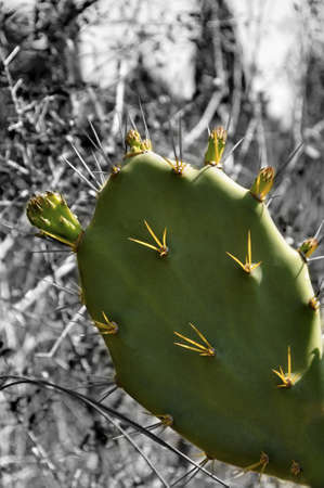 A Cactus In Color With A Black And White Background.